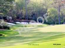 Grassy Area Shot