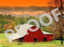 Nature Photography Farm